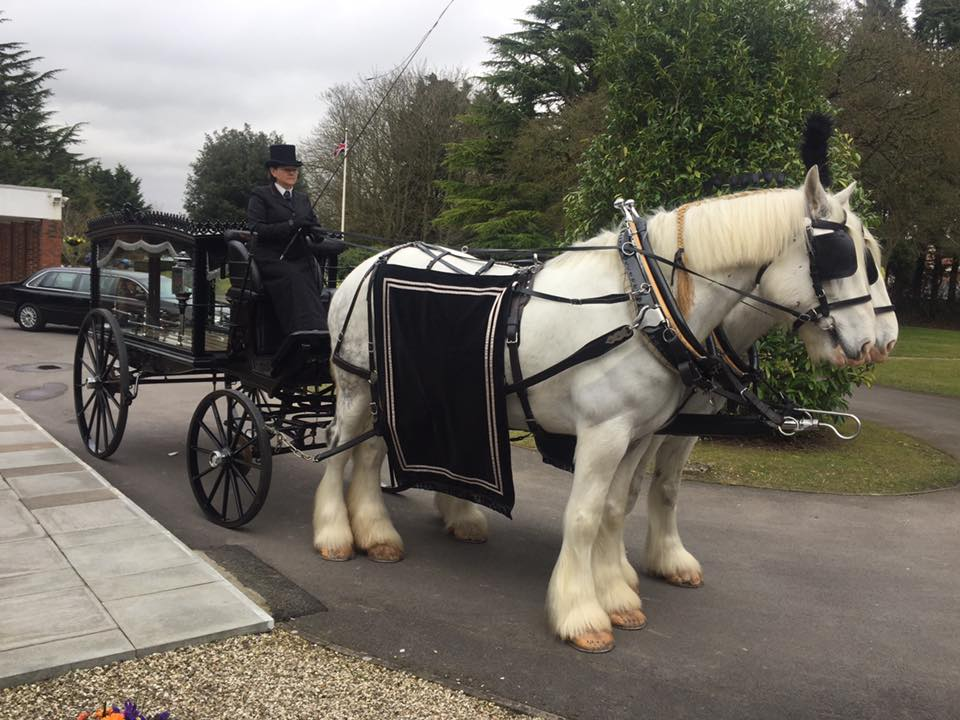 Horse drawn hearse with 2 beautiful white horses